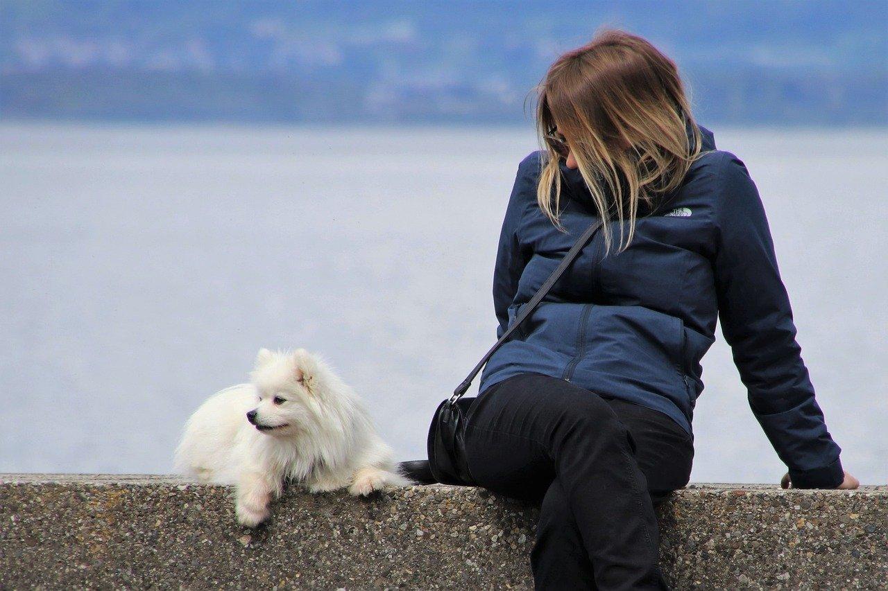 旅を楽しむ飼い主と犬