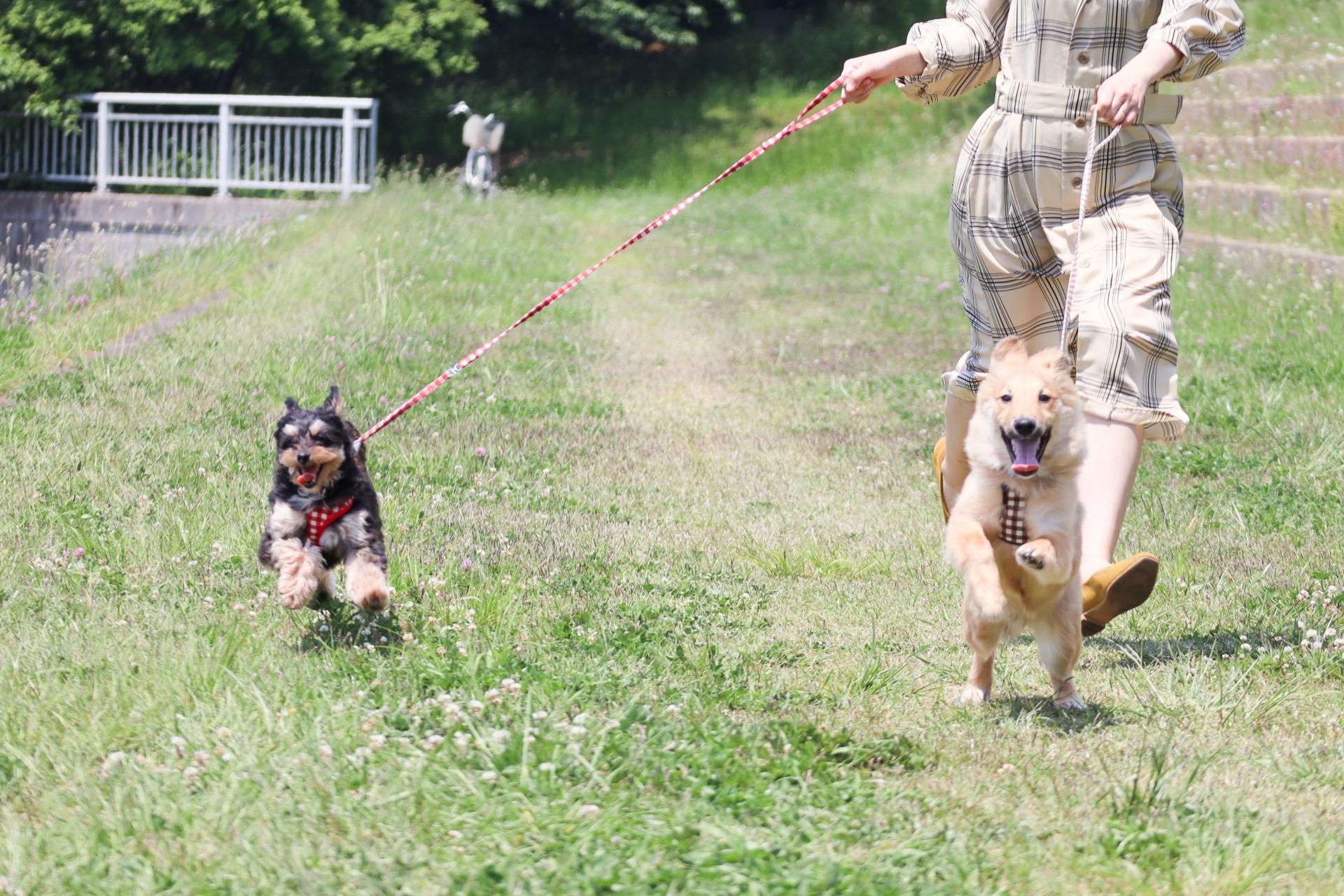 元気に走る犬と飼い主