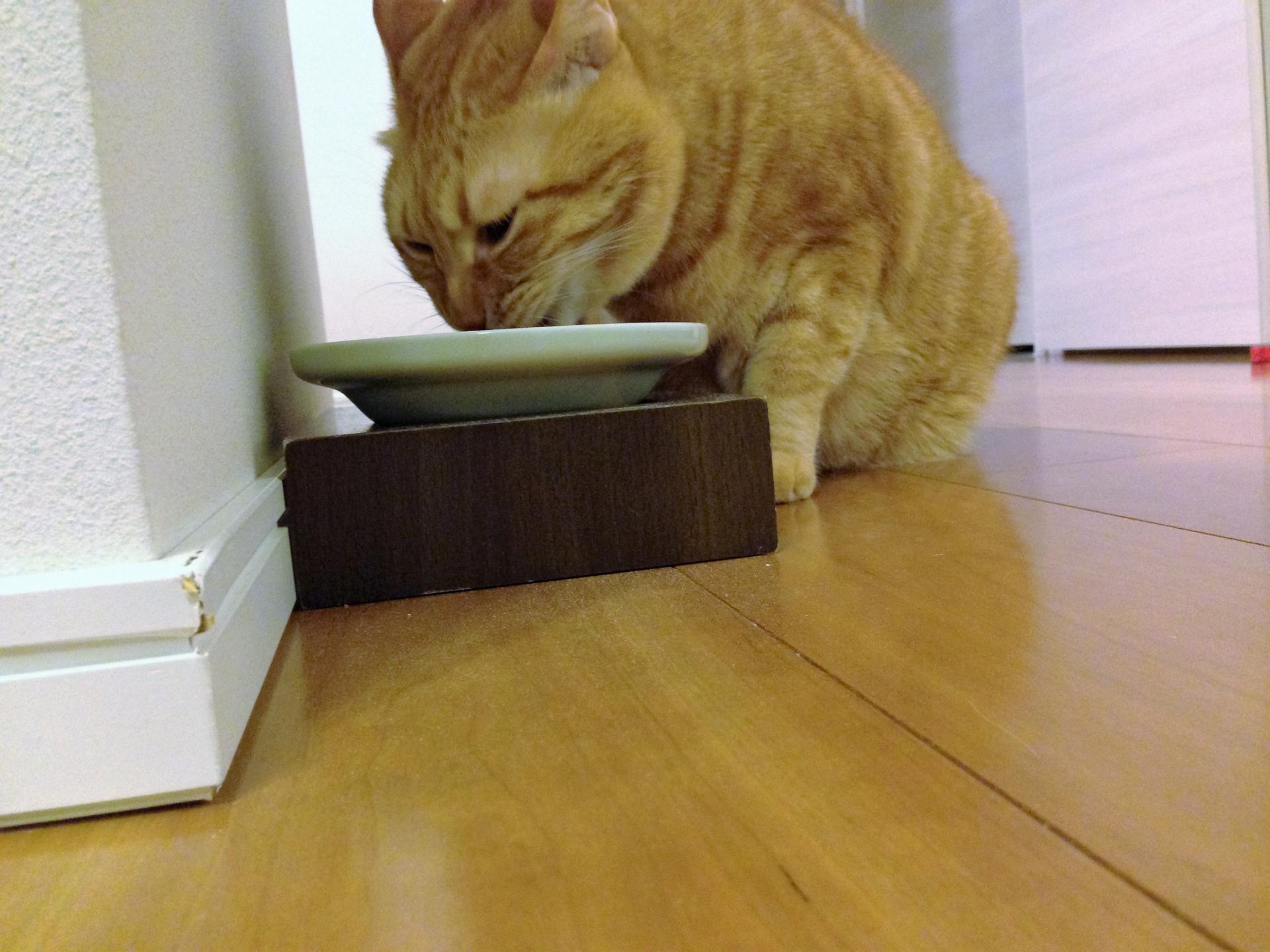 食事をする猫
