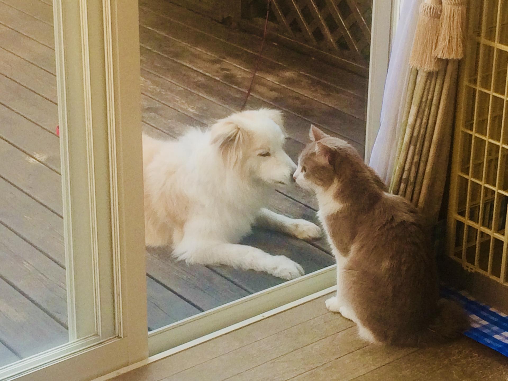 並んで外を見る犬と猫