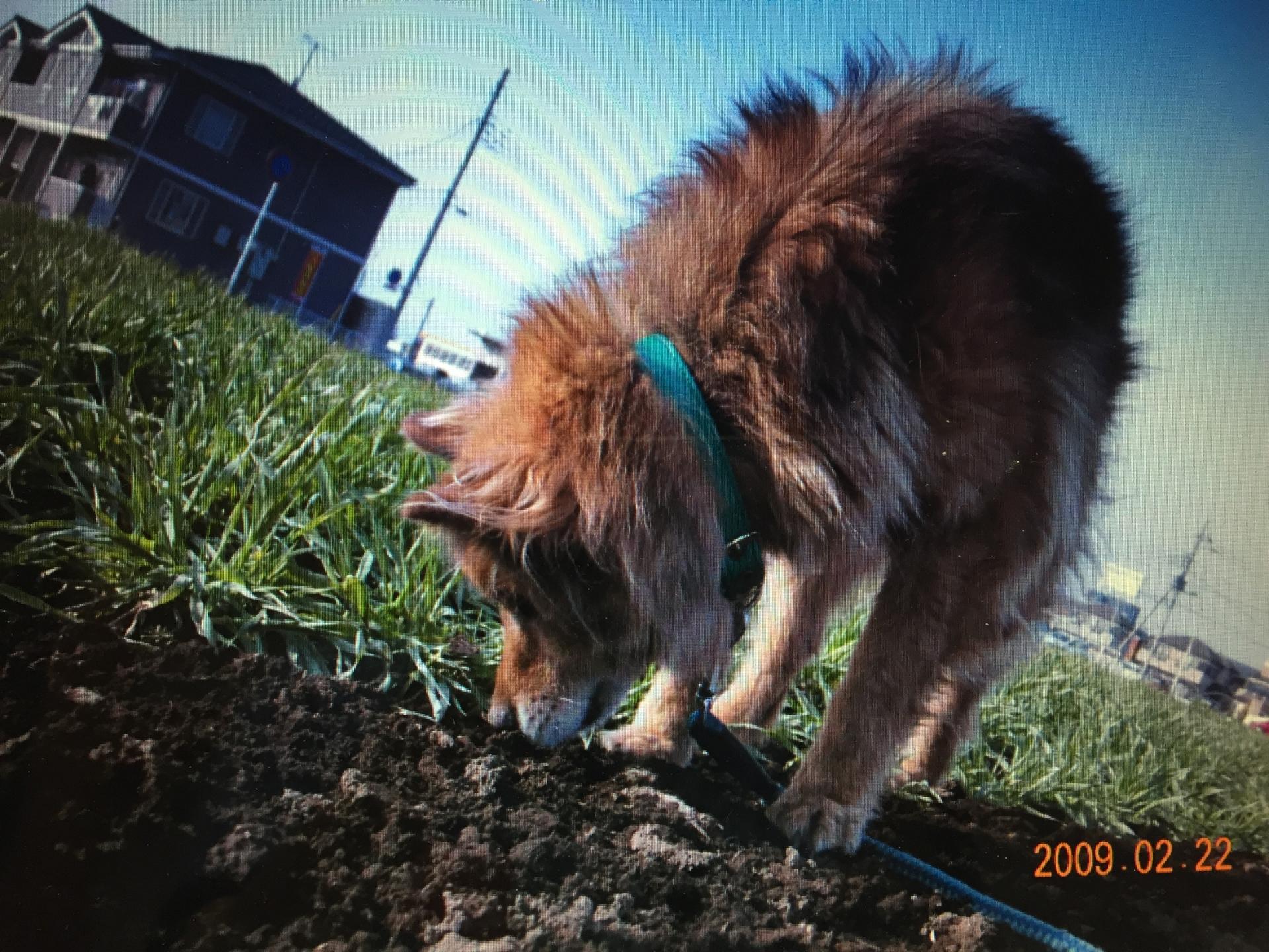 毛がボサボサの犬
