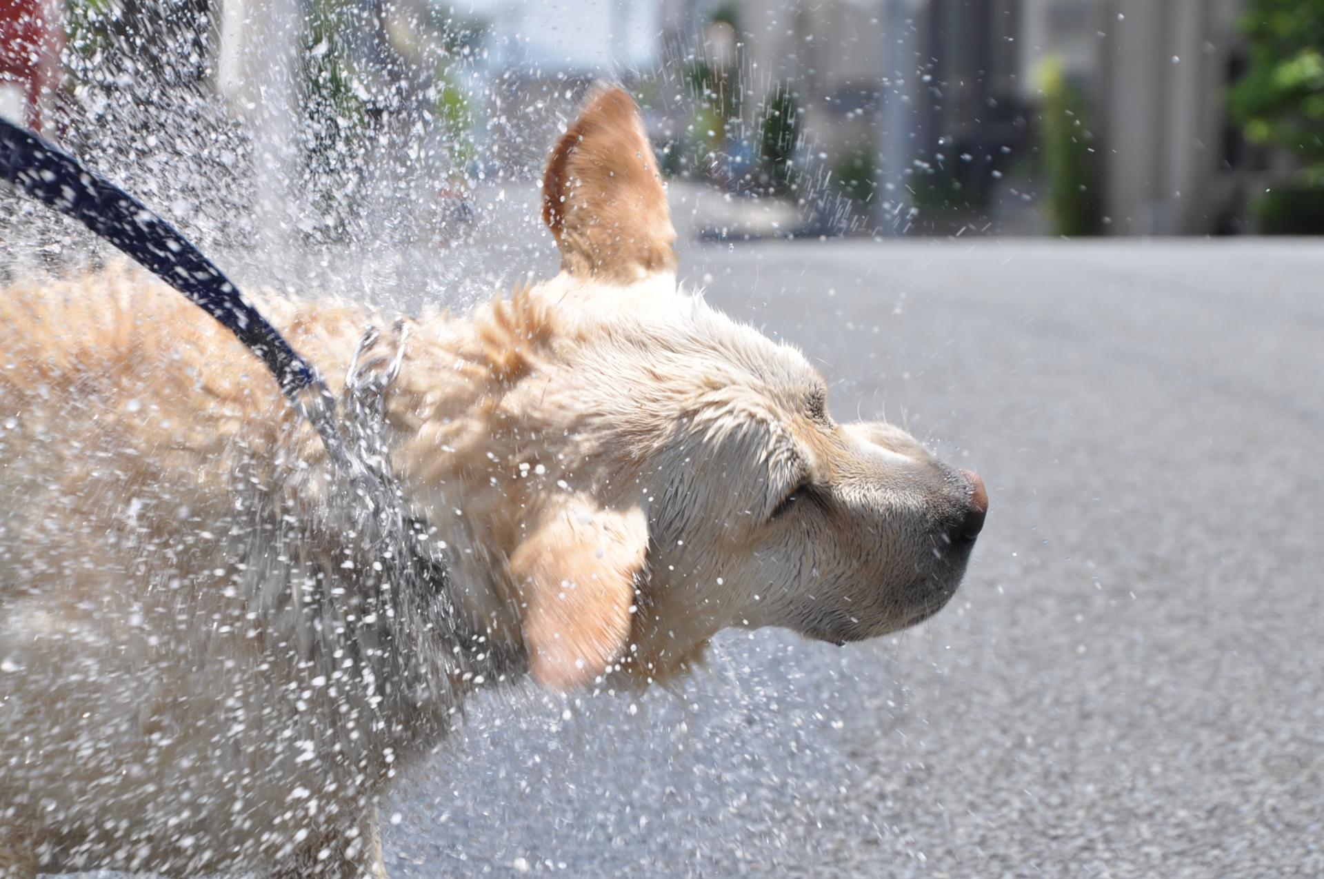 水しぶきをあげる犬
