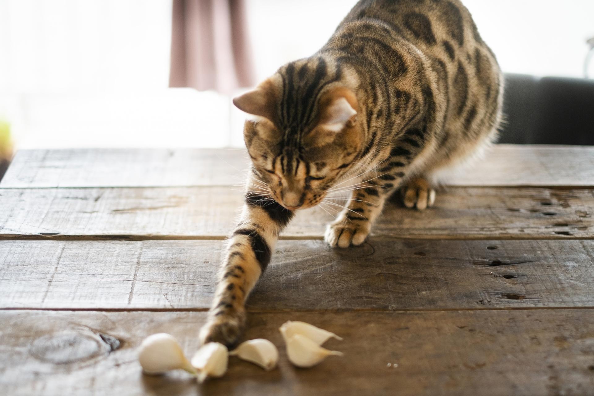 ニンニクで遊ぶ猫