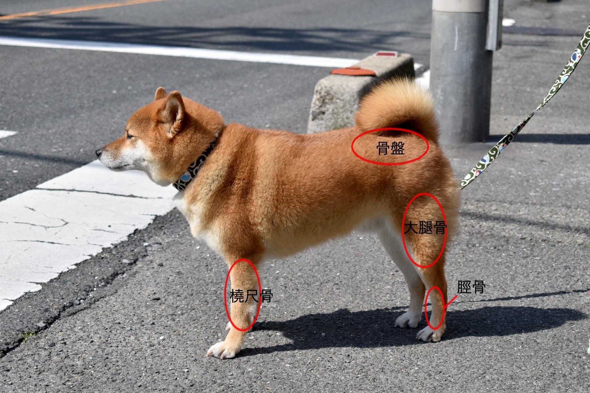横向きに立つ犬