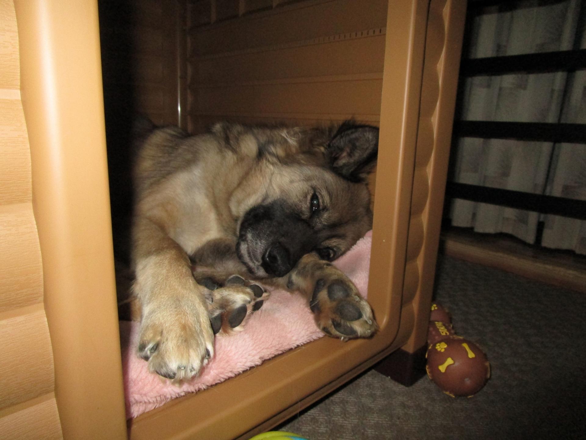 犬小屋で寝る犬
