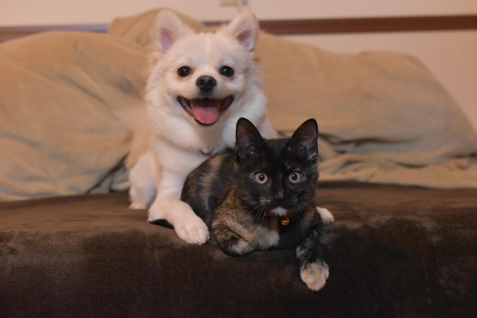 よりそう犬と猫