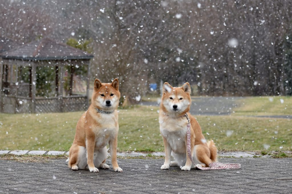 寒そうな犬