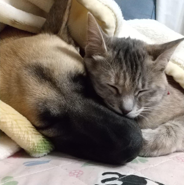 並んで眠る犬と猫