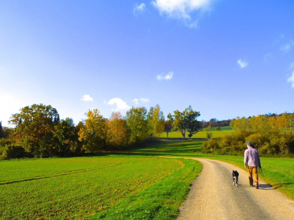 畑の脇道を散歩