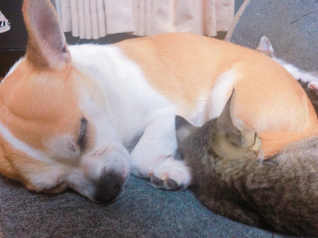 熟睡している犬と猫