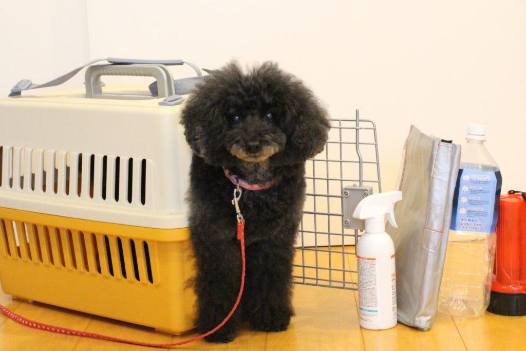 小型犬の同行避難