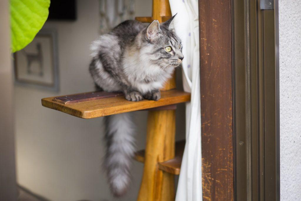 キャットタワーから外を見る猫