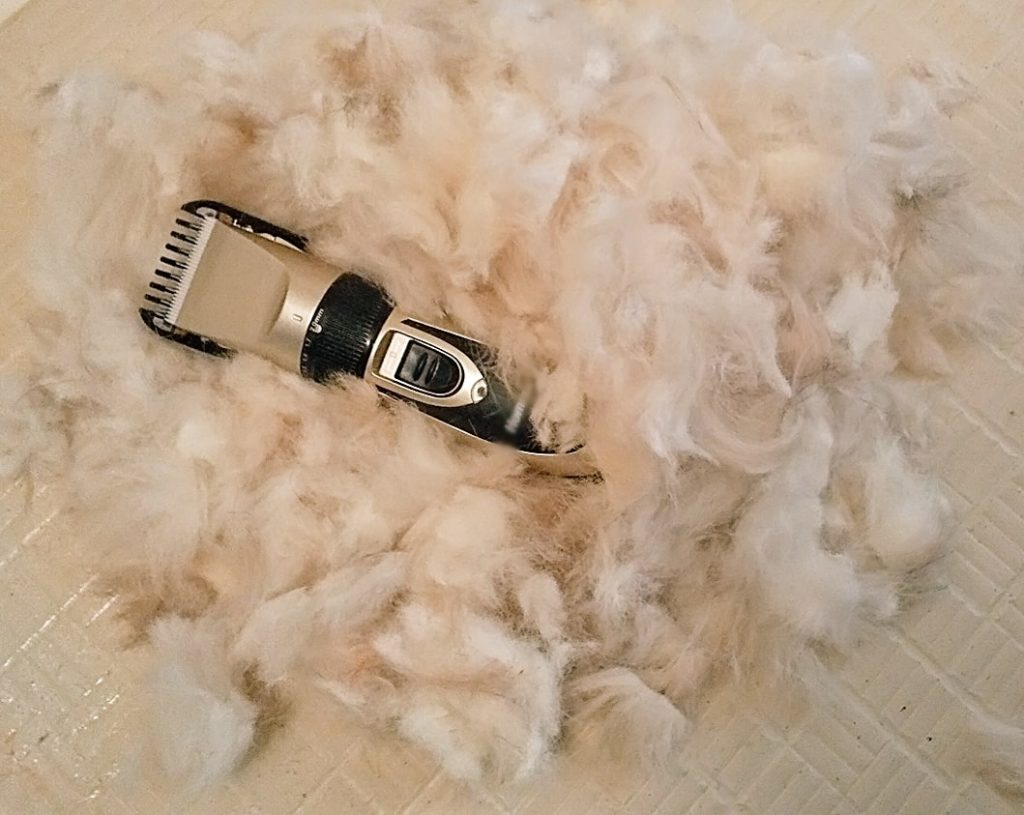 バリカンと刈った毛