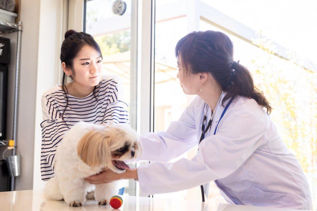 獣医師と飼い主