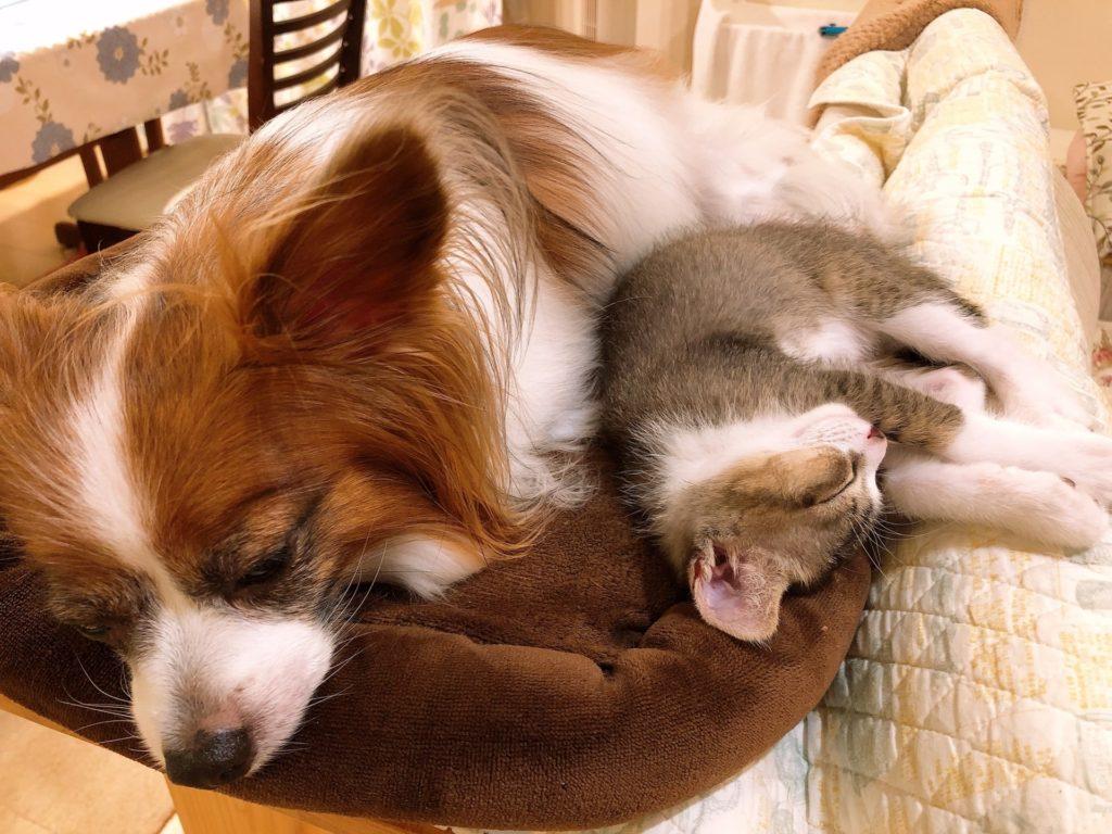 仲良く眠る犬と猫