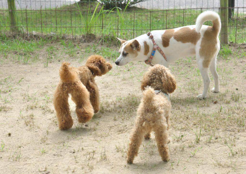 犬の社会性